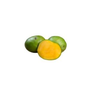 Mangue bio pièce 613306