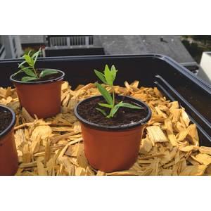 Pot de germination coloris orange Ø 13 cm 61692