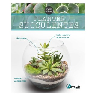 Plantes succulentes 622670