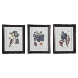 Tableau herbier avec cadre en bois et motifs graines 36 x 1,5 x 45 cm 635034
