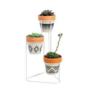 Assemblage de 3 echeverias avec support et pots décoratifs 635460