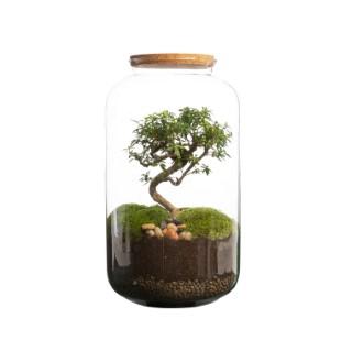 Terrarium bonbonne avec bonsaï Bulle de Nature taille M Ø 23 x h 41 cm 635475