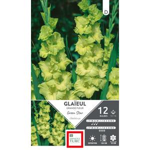 Bulbes de Glaïeul Green Star vert x 12 638772