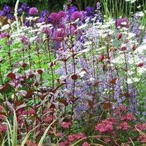 Plante vivace au choix parmi une grande variété en pot Ø 21 cm de 3 L 647297