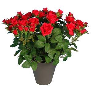 Pot rosette 649886