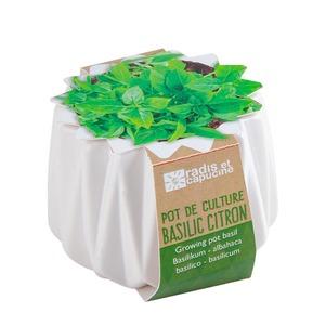 Petit pot origami de Basilic citron Bio à semer H 6 x Ø 6 cm 655604