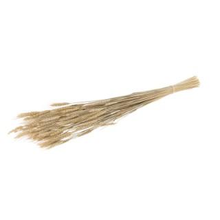 Gerbe blé 100 g 660371