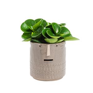 Mix Plantes vertes + cache-pot 664785