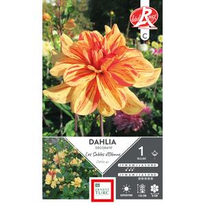 Bulbe de Dahlia décoratif split Les Sables d'Olonne orange 665444