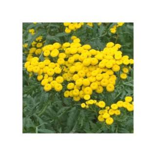 Repousse les insectes bio. Le pot biodégradable de 10.5 cm 670968