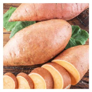 Patate douce Bonita bio en pot recyclé Ø 13-15 cm 673945