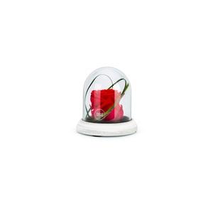 Verrine cloche Cim rouge taille XS Ø 10,5 x H 10 cm 683883