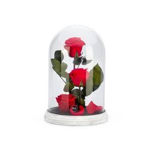 Verrine cloche Cim rouge taille XL Ø 17 x H 27 cm 683887