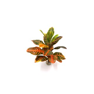 Croton vert de savane en tissu pour terrarium 48 cm 693183