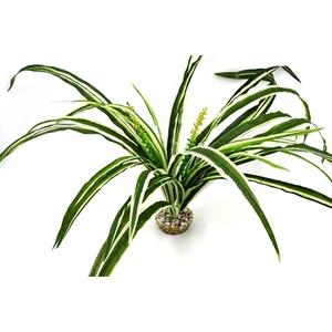 Chlorophytum vert en tissu pour terrarium 30 cm 693186
