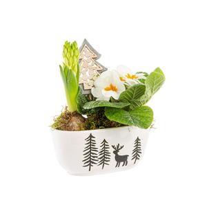 Primula Jacinthe Jardi Ceramique 693315