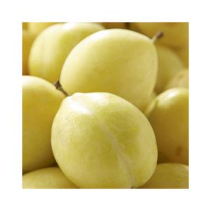 Prunier miraclaude jaune en pot de 12 L 694882