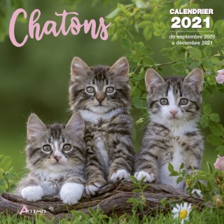 Calendrier chatons 2021 éditions Artemis 696464