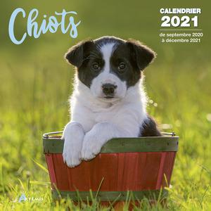 Calendrier chiots 2021 éditions Artemis 696467