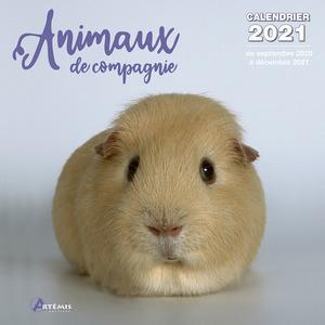Calendrier animaux de compagnie 2021 éditions Artemis 696483