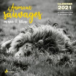 Calendrier animaux sauvages en noir et blanc 2021 éditions Artemis 696493