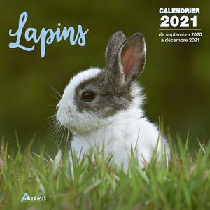 Calendrier lapins 2021 éditions Artemis 696494