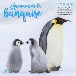 Calendrier animaux de la banquise 2021 éditions Artemis 696503