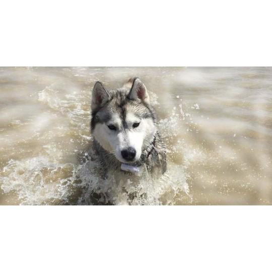 Husky chien métal Jardin d/'ornement suspendu Support