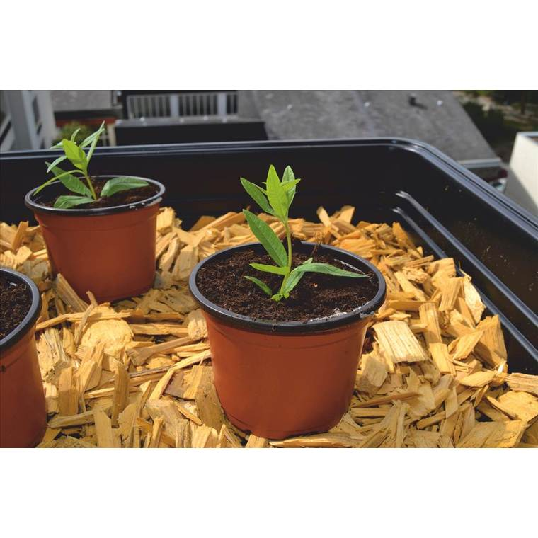 Pot de germination coloris orange Ø 9 cm 61691