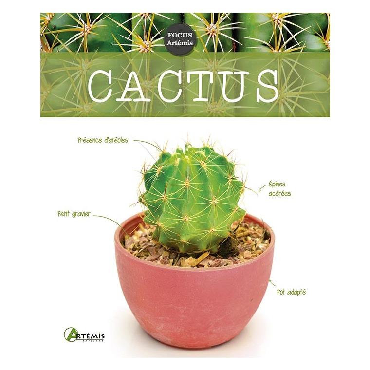 Cactus 622667