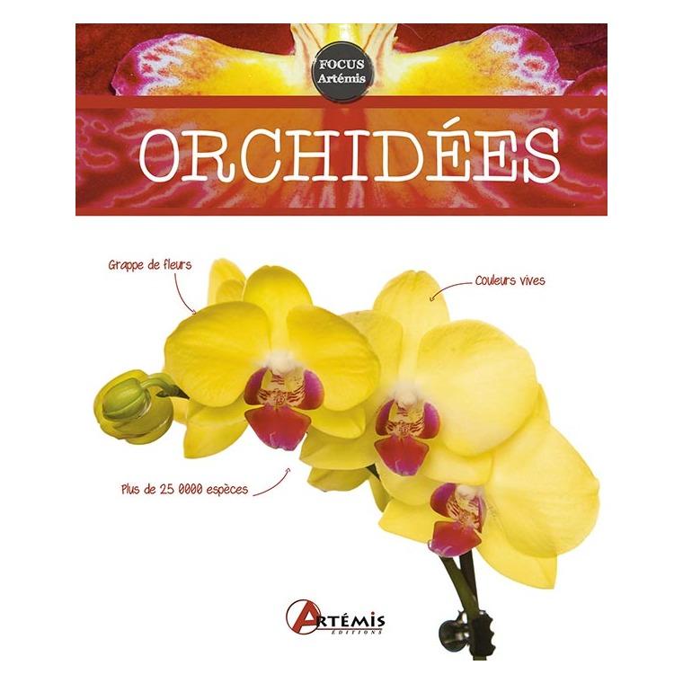 Orchidées 622668