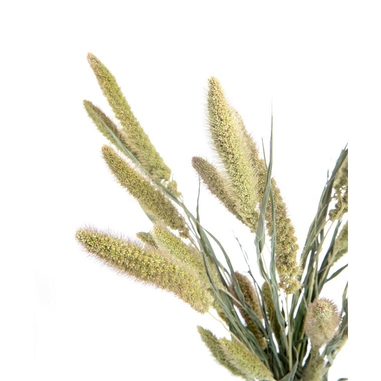Bouquet Phalaris 624241
