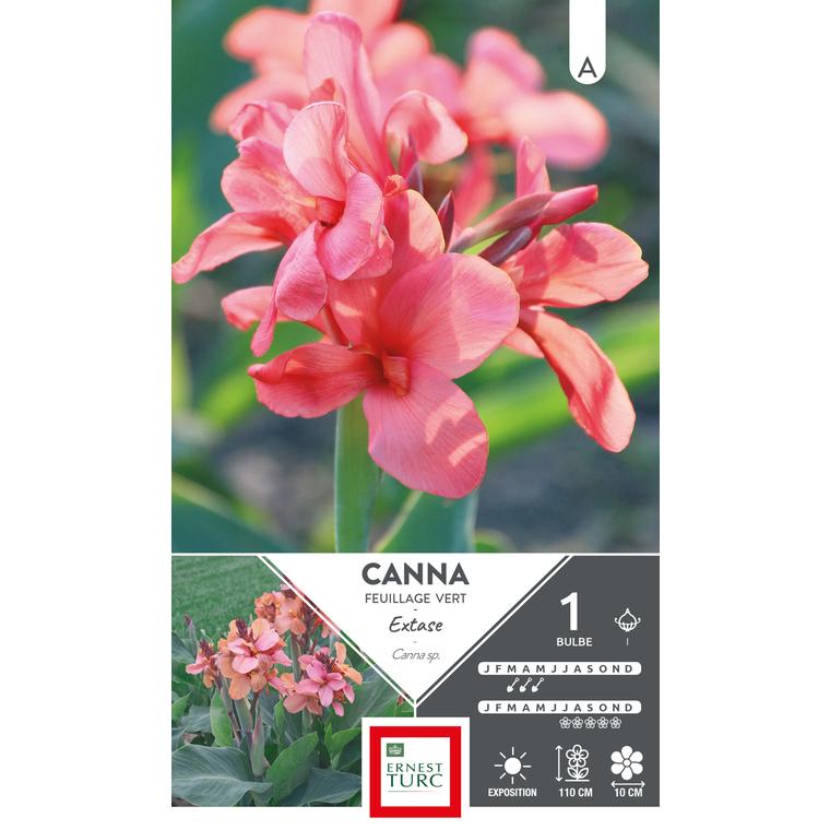 Bulbe de Canna haut extase rose 636049