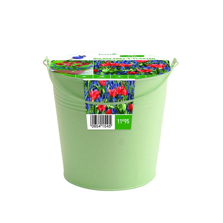 Bulbe tulipe blanche et muscari bleu en pot métal botanic® x15 654154