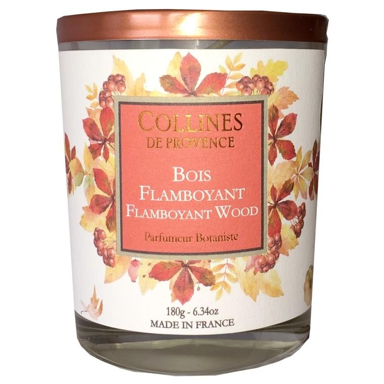 Bougie parfumée au bois flamboyant orange de 180 g 660306