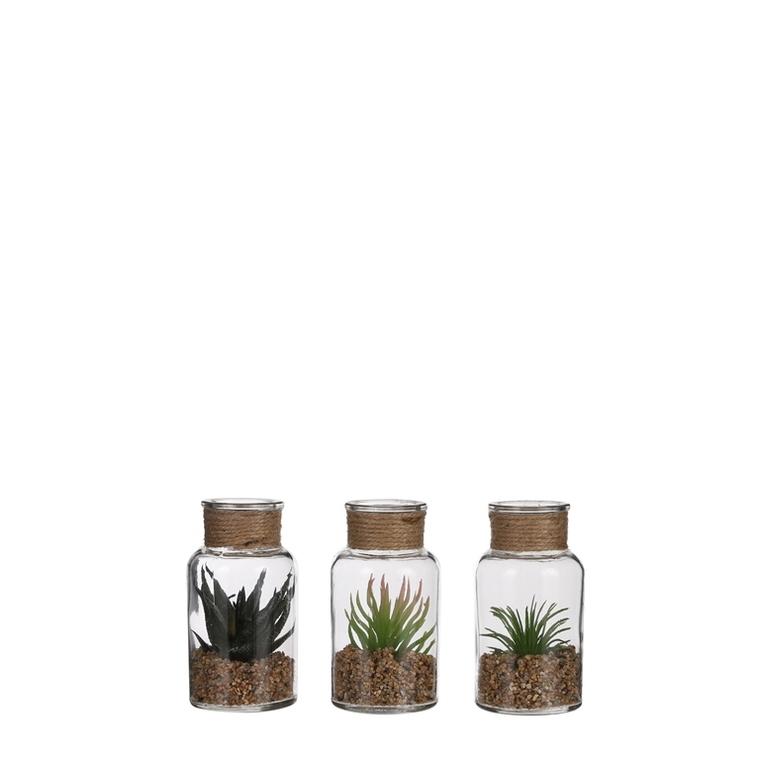 Succulente verre Ø6x12 cm 661491