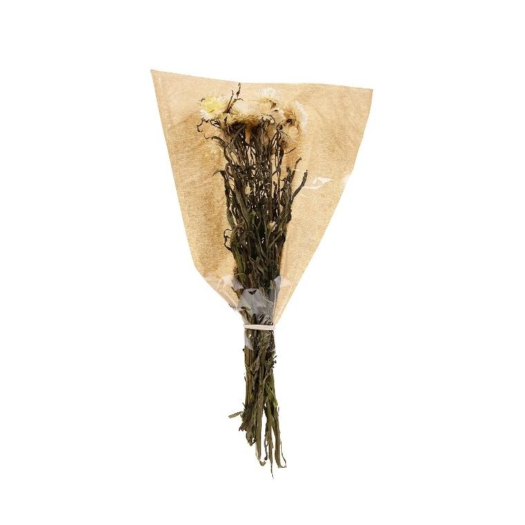Helichrysum blanc 682243