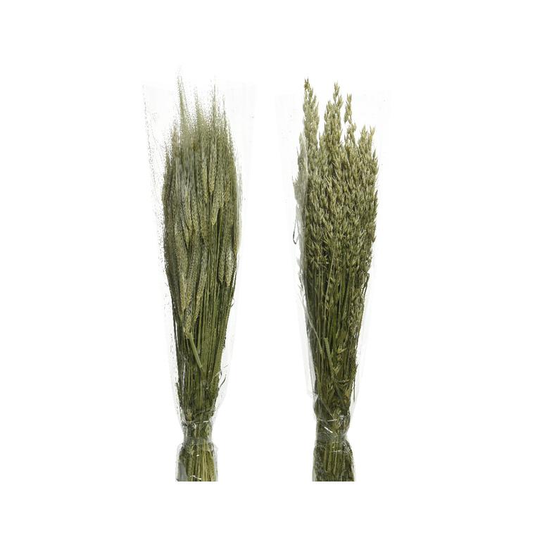 Bouquet d'herbe séchée 25x10x75 cm 699945