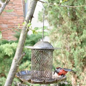 Suspension métal distributeur filtre de graines avec 1 oiseau 700883