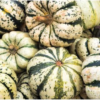 Courge Patidou Sweet Dumpling bio. Cartonnette de 1 plant 709470