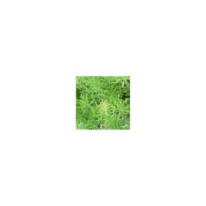 Asparagus. Le pot de 1 litre 791049