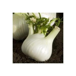 Fenouil. La barquette de 6 plants 489126