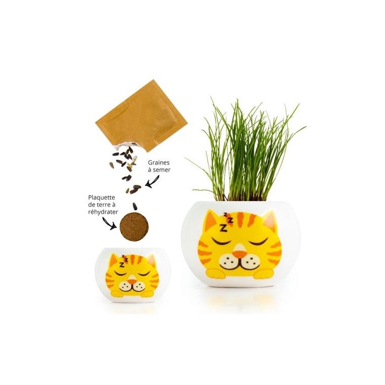 Kit prêt à semer en pot blanc décor Chat jaune tigré roux 703025