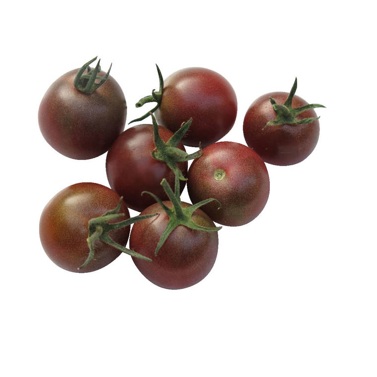 Tomate Cerise Ronde Black Cherry bio. Cartonnette de 1 plant 709493