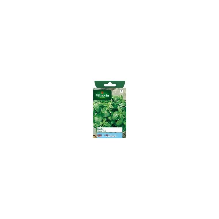 Basilic grand vert 782669