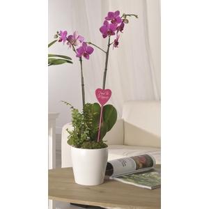 Composition orchidée 819986