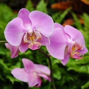 Orchidée 4 branches + cache-pot 358885