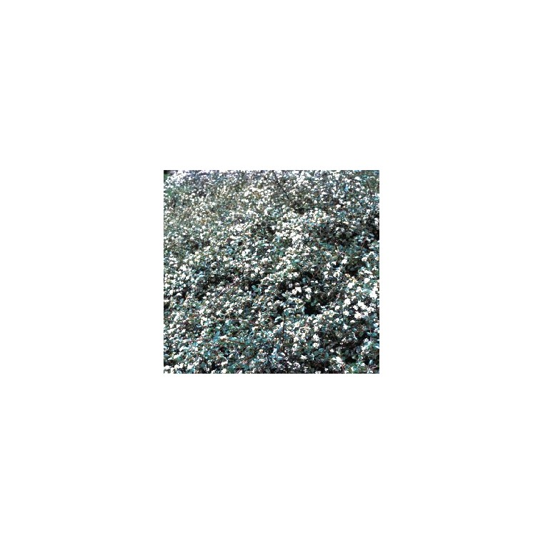 Cotoneaster Damneri Skogholmen vert en pot de 2 L 964037