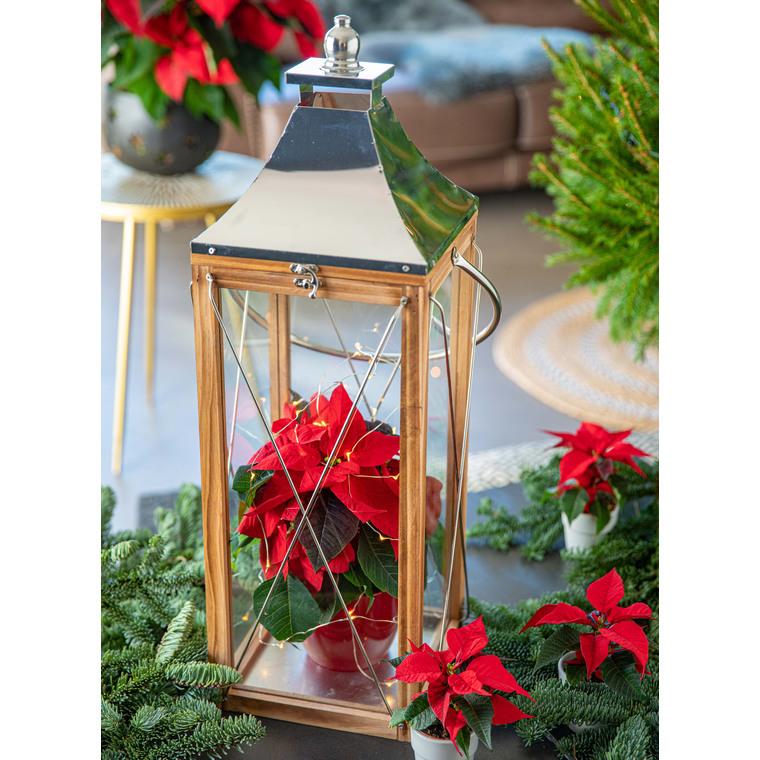 Poinsettia rouge en pot Ø 10.5 cm 824463