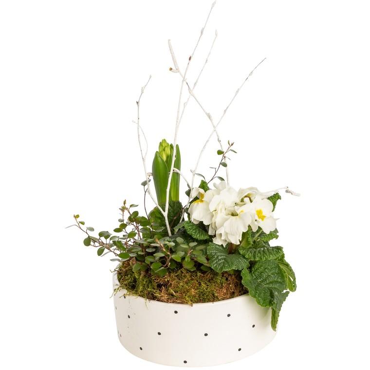 Composition de plantes pour l'extérieur vert et blanc 825146